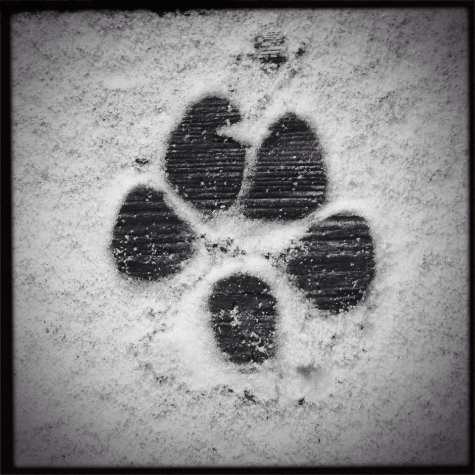 Puppy paw print in snow